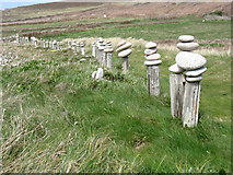 SV8715 : Posts and stones by the Bryher coast path! by David Purchase