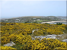 SV8714 : The Town, Bryher, from Samson Hill by David Purchase