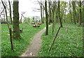 TG3607 : Path in Buckenham Woods by Evelyn Simak