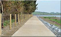 J4037 : Coastal path, Dundrum (1) by Albert Bridge