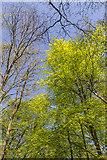 TQ2897 : Spring in Trent Park, London N14 by Christine Matthews
