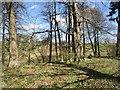NU0512 : Woodland, Eslington Park by Richard Webb