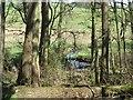 NU0512 : River Aln by Richard Webb