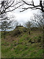 SK4613 : Oak woods just below Bardon Hill trig by Richard Law