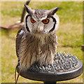 SD5705 : Southern White-Faced Owl (Ptilopsis granti) by David Dixon