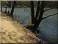 TQ3331 : Wakehurst Place:Westwood Lake by Alan Hunt