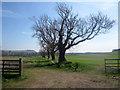 NU0424 : Field boundary near Newtown by Graham Robson