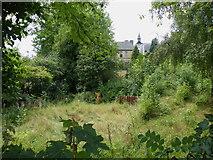 SK3487 : Albion Street Garden, Crookesmoor, Sheffield - 3 by Terry Robinson