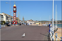 SY6879 : Gull on the prom, Weymouth by Peter Barr