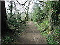 ST7582 : The Cotswold Way in Little Sodbury Wood by Ian S
