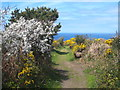 SW7151 : Footpath leading to the coast path at Polberrow by Rod Allday