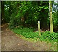 SU9086 : Bridleway junction north of Harvest Hill by Shazz