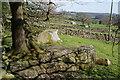 SE1865 : Exposed rocks by the Nidderdale Way by Bill Boaden
