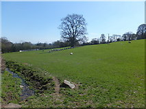 SJ2734 : Grazing field with unfenced open ditch by John Haynes