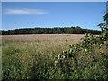 SP1063 : Northeast corner of plantation, Spernall Park by Robin Stott