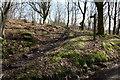 SD2392 : Bridleway, Broughton Moor by Rob Noble