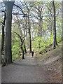 NZ3374 : Riverside walk through Holywell Dene by Derek Voller