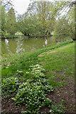 TL7835 : Lake, Castle Hedingham, Colne Valley, Essex by Christine Matthews