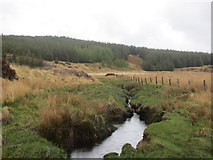 NR7849 : Forest and fenceline in Gleann Laoigh by John Ferguson
