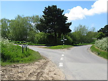 SU8700 : Conifer at the junction of Runcton Lane and Punches Lane by Dave Spicer