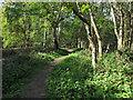 TM0120 : Path in Donyland Woods by Roger Jones