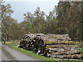 NH2925 : Timber stack beside road to Tomich by Trevor Littlewood