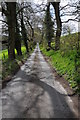 SN6333 : Country road near Talley by Philip Halling