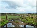 SW4536 : Unusual field gate by Robin Webster