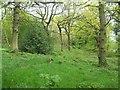 SK3399 : Woodland Footpath near Upper Tankersley by Jonathan Clitheroe