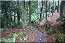 NU0702 : Footpath in the Cragside Estate by Bill Boaden