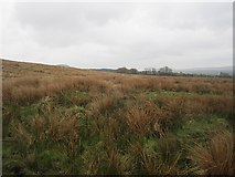 NY4987 : Rough grazing on Yethouse Hill by Richard Webb