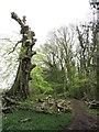 SN0613 : Nature trail at Bluestone holiday park by Gareth James