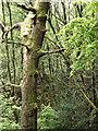 SJ9893 : The Great Wood by Stephen Burton