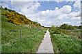 TQ9019 : Path below Cadborough Cliff by Ian Capper