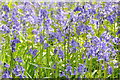 SO9245 : Bluebells in Tiddesley Wood by Philip Halling