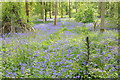 SO9345 : Bluebells in Tiddesley Wood by Philip Halling