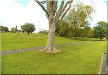 SO9394 : Robert Wynd Park by Gordon Griffiths