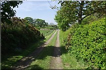 SD6222 : Track to Moss Side Farm by Philip Platt