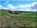 NS9037 : Towards Glencosie by Mary and Angus Hogg