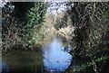 TQ5473 : River Darent by N Chadwick