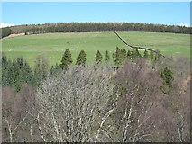 NY9449 : The valley of Beldon Burn below High Beldon Plantation by Mike Quinn