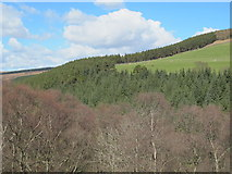 NY9449 : The valley of Beldon Burn around low Beldon Plantation by Mike Quinn
