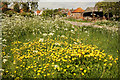 SK8546 : Buttercups by Richard Croft