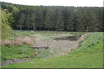 NT9911 : Pond below Churchbrae Plantation by Bill Boaden