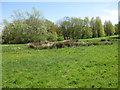 SE6969 : Dew pond, The Yorkshire Arboretum by Pauline E