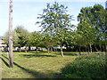 TM3674 : Walpole Village Green by Geographer