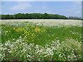 TQ5344 : Wildflower meadow seen from the Eden Valley Walk by Marathon