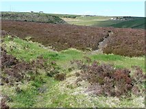 SE0429 : Footpath through heather at Cold Edge Dams by Humphrey Bolton