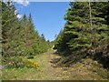 NG3827 : Path in Glen Brittle Forest by Richard Dorrell