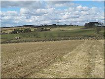 NZ0267 : Farmland west of Shildon by Mike Quinn